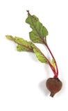 Vegetable 08 Stock Image