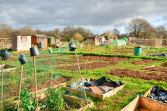 Vegetable allotments Stock Image