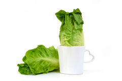 Vegetable Baby Cos lettuce put in beautiful cup isolate on white background. Baby Cos lettuce put in beautiful cup isolate on white Stock Photography