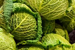 Vegetable background cabbage savoy basil whole head green openwork leaf close-up royalty free stock photos