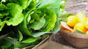 Vegetable basket from backyard garden Stock Photography