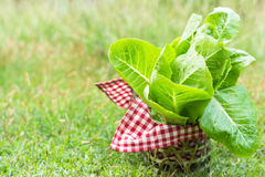 Vegetable basket. Close up green vegetable in a basket on the ground Royalty Free Stock Photos