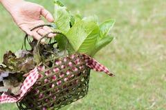 Vegetable basket. Close up hand hold the vegetable basket Stock Photo