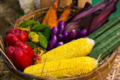 Vegetable in the basket Stock Photos