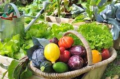 Vegetable basket in garden Stock Photos