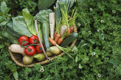 Vegetable Basket Surrounded By Clover Stock Photo