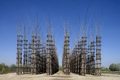 The Vegetable Cathedral in Lodi, Italy, made up 108 wooden columns among which an oak tree has been planted. Over the years it will give the sense of a gothic stock photography