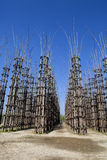The Vegetable Cathedral in Lodi, Italy, made up 108 wooden columns among which an oak tree has been planted. Over the years it will give the sense of a gothic stock photos