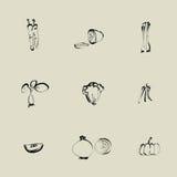 Vegetable Chinese brush icon stock illustration