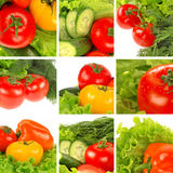 Vegetable collage. From nine elements Stock Image