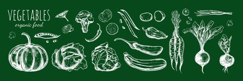 Vegetable collection. Vector hand drawn sketch illustration 1 Royalty Free Stock Photography