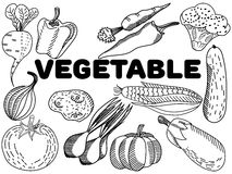 Vegetable coloring vector for adults Royalty Free Stock Photo