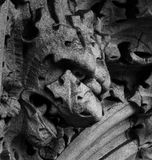 The vegetable creature. Shot in black and white, detail on an sculpture representing a strange creature placed in the facade of this ancient building, set in Stock Image