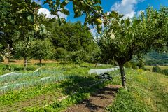 Vegetable crops and apple trees. In the summer in France Stock Images