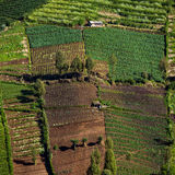 Vegetable crops on the hilly fields. Java, Indonesia Royalty Free Stock Photos