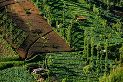Vegetable crops on the hilly fields. Java, Indonesia Stock Image