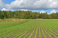 Vegetable cultivation Royalty Free Stock Images