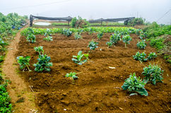 Vegetable cultivation Stock Images