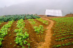 Vegetable cultivation Royalty Free Stock Photo