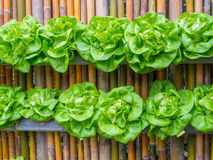 Vegetable in decorated wall vertical garden Idea Royalty Free Stock Images