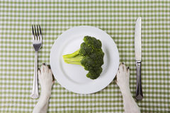 Vegetable dog diet Royalty Free Stock Images