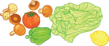 Vegetable with Doodle Style Illustration. For many purpose such as cook book, food book, food and cook blog or website, etc. Doodle marker style illustration Royalty Free Illustration