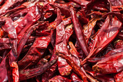 Dried Chili. Vegetable Dried Chili Peppers make to Cooking Royalty Free Stock Photos
