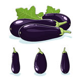 Vegetable Eggplant, Edible Fruit Royalty Free Stock Images