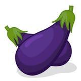 Vegetable eggplant. Isolated  illustration on white background Stock Images