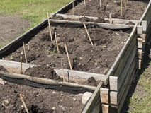 Vegetable elevated wooden beds. Gardening equipment for home gardeners. Compost soil and seed setting. Sunny day. Agriculture equipment. Small trowel and rakes Royalty Free Stock Photos