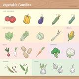 Vegetable families. Vegetables families including seven categories: fruit vegetables, leaf vegetables, cereals, roots, cabbages, legumes and bulbs Stock Image
