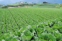 Vegetable farm Royalty Free Stock Photography