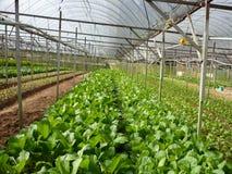 VEGETABLE FARM Stock Image