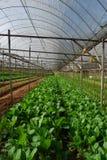 Vegetable farm Royalty Free Stock Photos