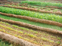 Vegetable farm Agriculture concept Stock Images