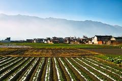 Vegetable farm and farmer's house Stock Photo