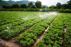 Vegetable farm Royalty Free Stock Photos