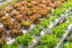 Vegetable farm Stock Photos