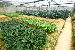 Vegetable farm Stock Images