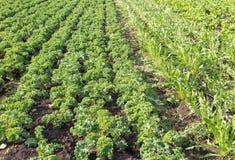 Vegetable Farm Stock Images