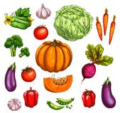 Vegetable and farm market veggies sketches Stock Photo