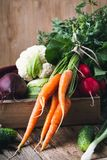 Vegetable farming. Beetroots, rudishes, cauliflower and carrots. Vegetable farming. Harvest still life.   Food composition of fresh organic beetroots, rudishes Royalty Free Stock Photography