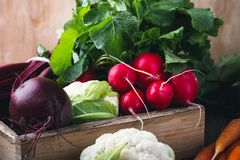 Vegetable farming. Beetroots, rudishes, cauliflower on wooden. Vegetable farming. Harvest still life.   Food composition of fresh organic beetroots, rudishes Stock Photos
