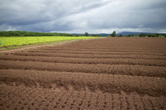 Vegetable farming. Royalty Free Stock Photos