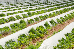 Vegetable farming Stock Images