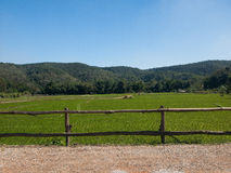 Vegetable farming. And stunning views background Royalty Free Stock Photos