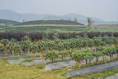 Vegetable Farming Stock Photography