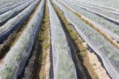 Vegetable farmland Royalty Free Stock Image