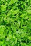 Vegetable fern salad Stock Photos