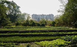 Vegetable field before apartments on urban fringe in sunny winter afternoon. Vegetable field before storied apartments on the urban fringe in sunny winter royalty free stock photography